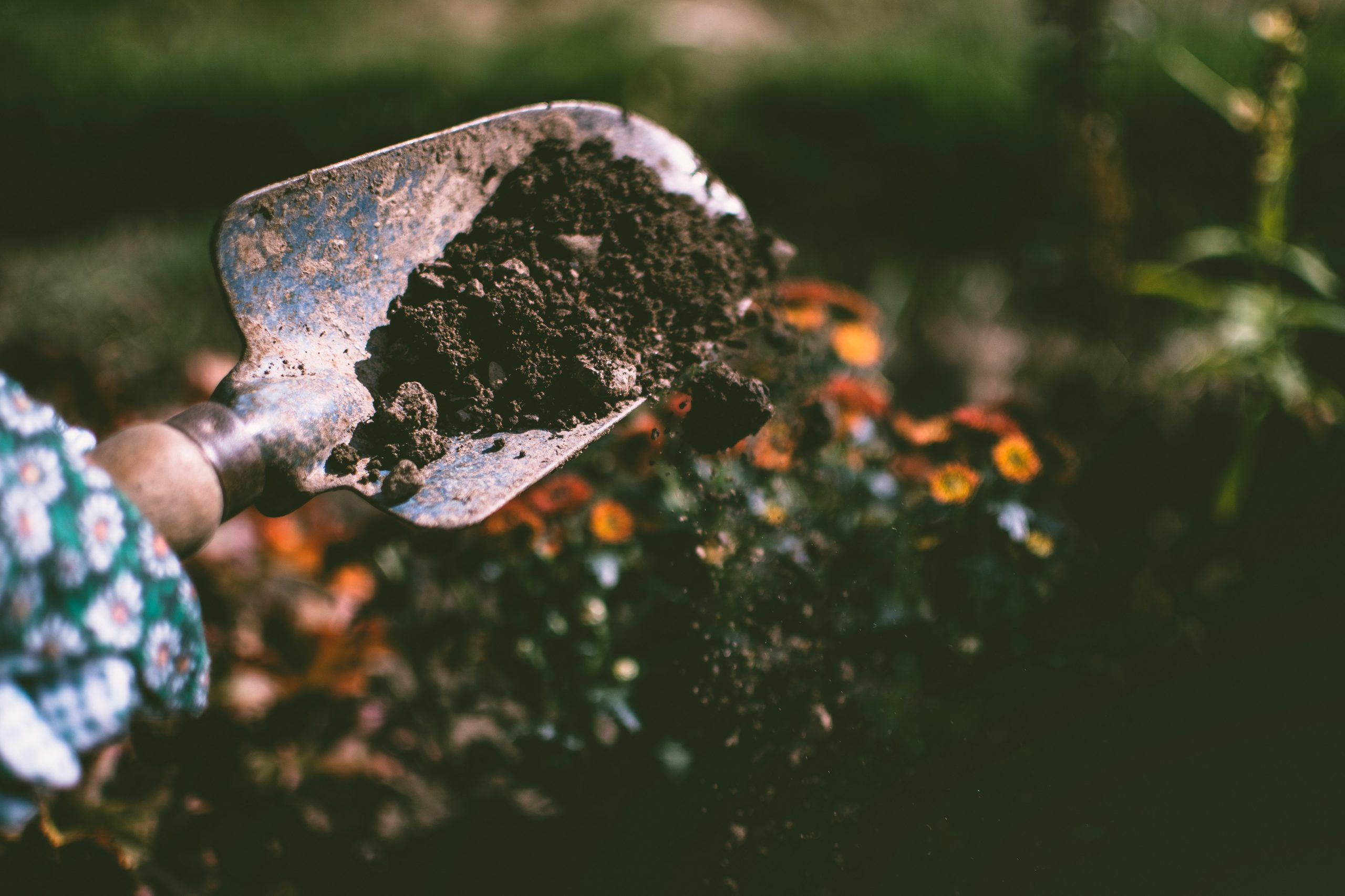 Ways Your Health Can Benefit from Gardening