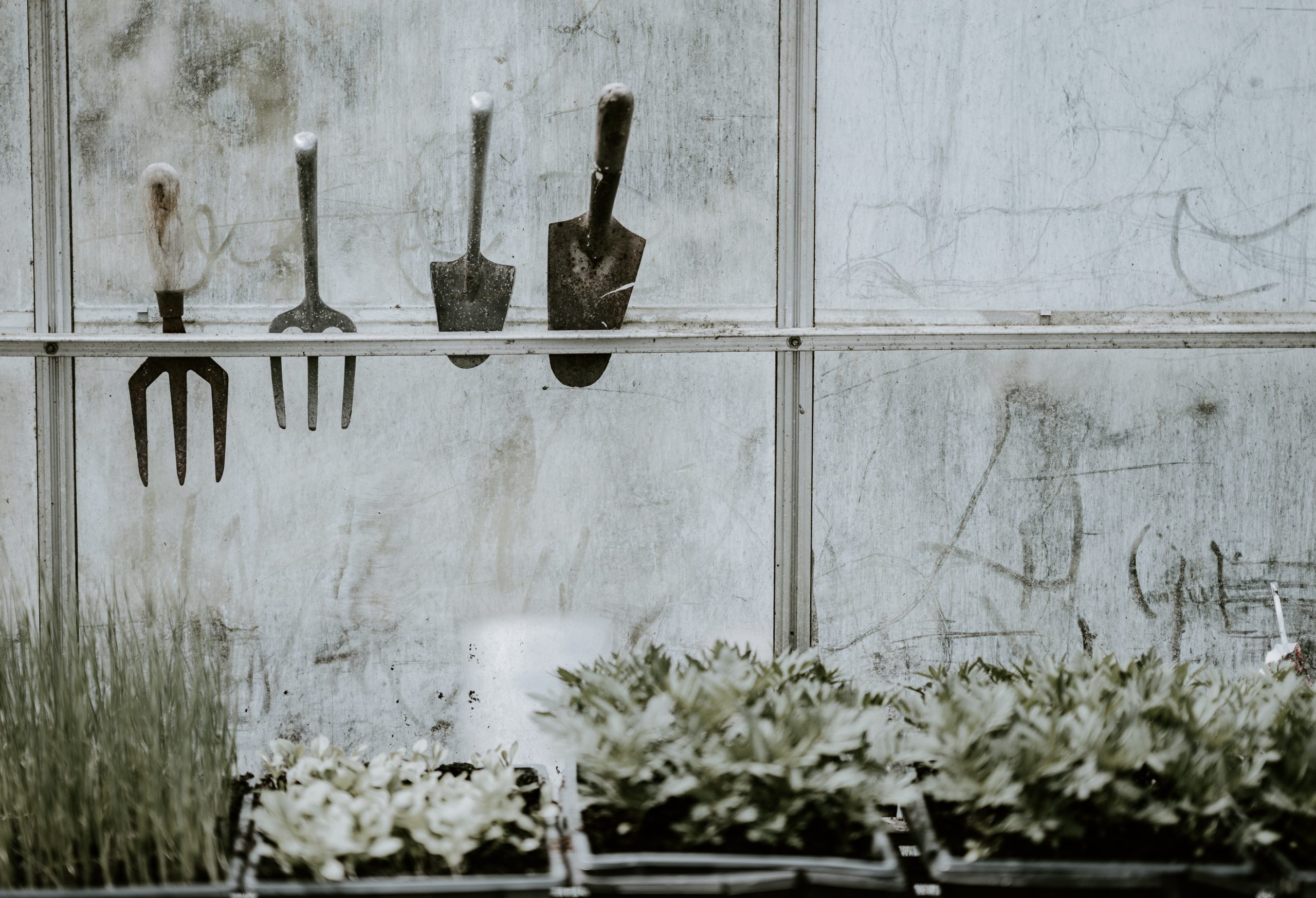 How to Disinfect a Gardening Tool